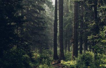 prechádzka lesom 2